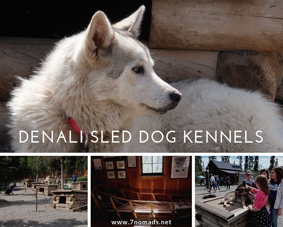 Denali sled dog kennels